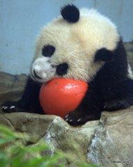 I Has a Ball!